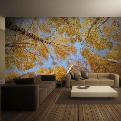 Fototapeta Jesienne Korony Drzew Fototapety Tapety